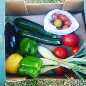 Petit panier de légumes BIO