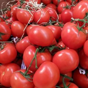 Tomates rondes BIO - 500g